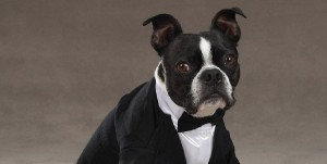 dog_wedding_03